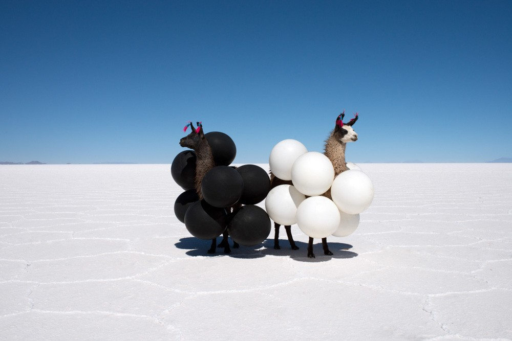 Gray Malin Llamas Black and White Balloons