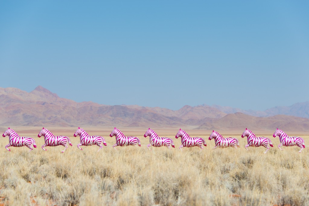 Gray Malin Hot Pink Zebras Balloons