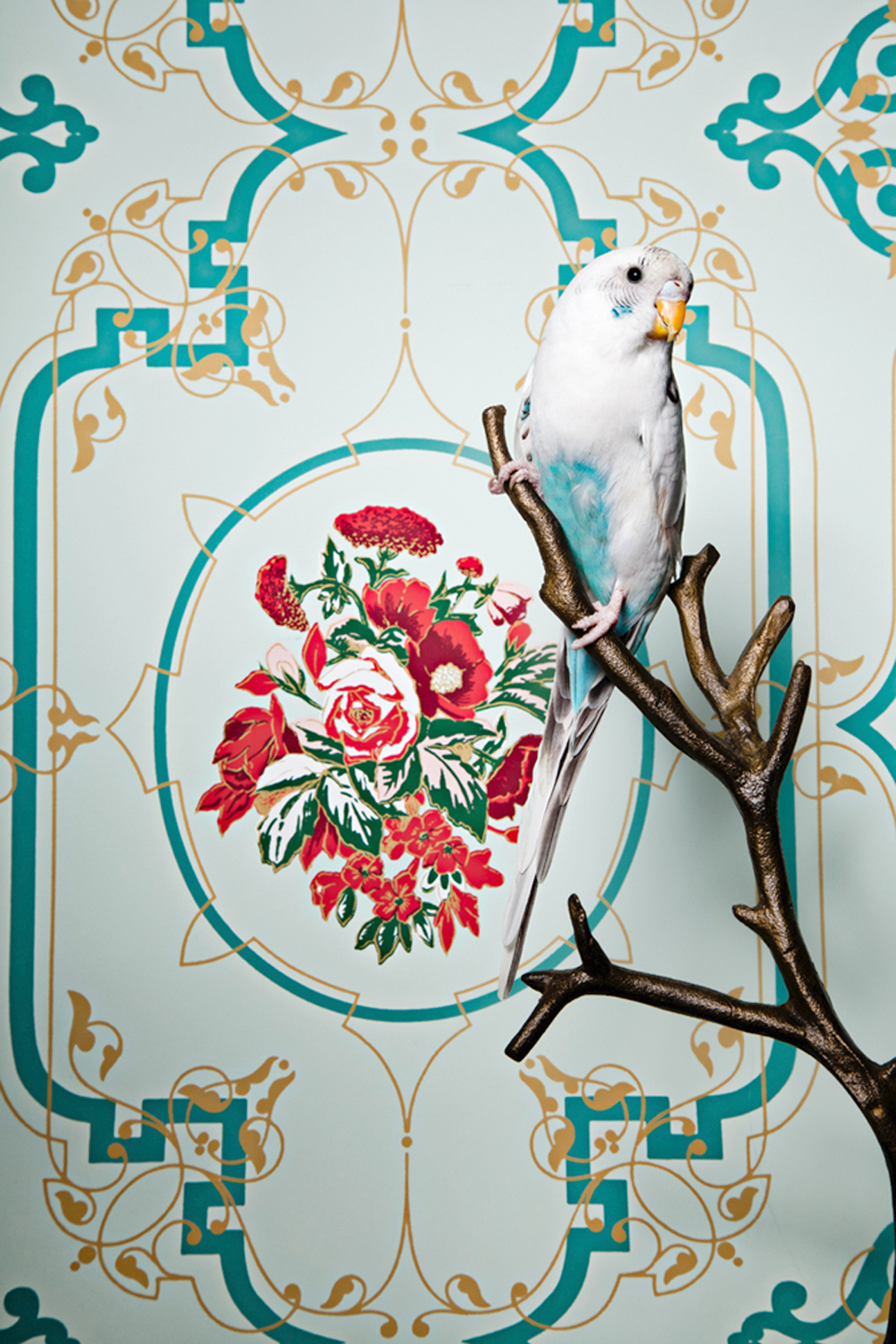 Claire Rosen | Common Parakeet in front of a Vintage Wallpaper