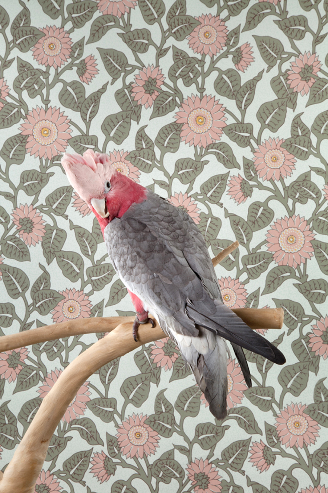Claire Rosen | Rose Breasted Cockatoo in front of a Vintage Wallpaper
