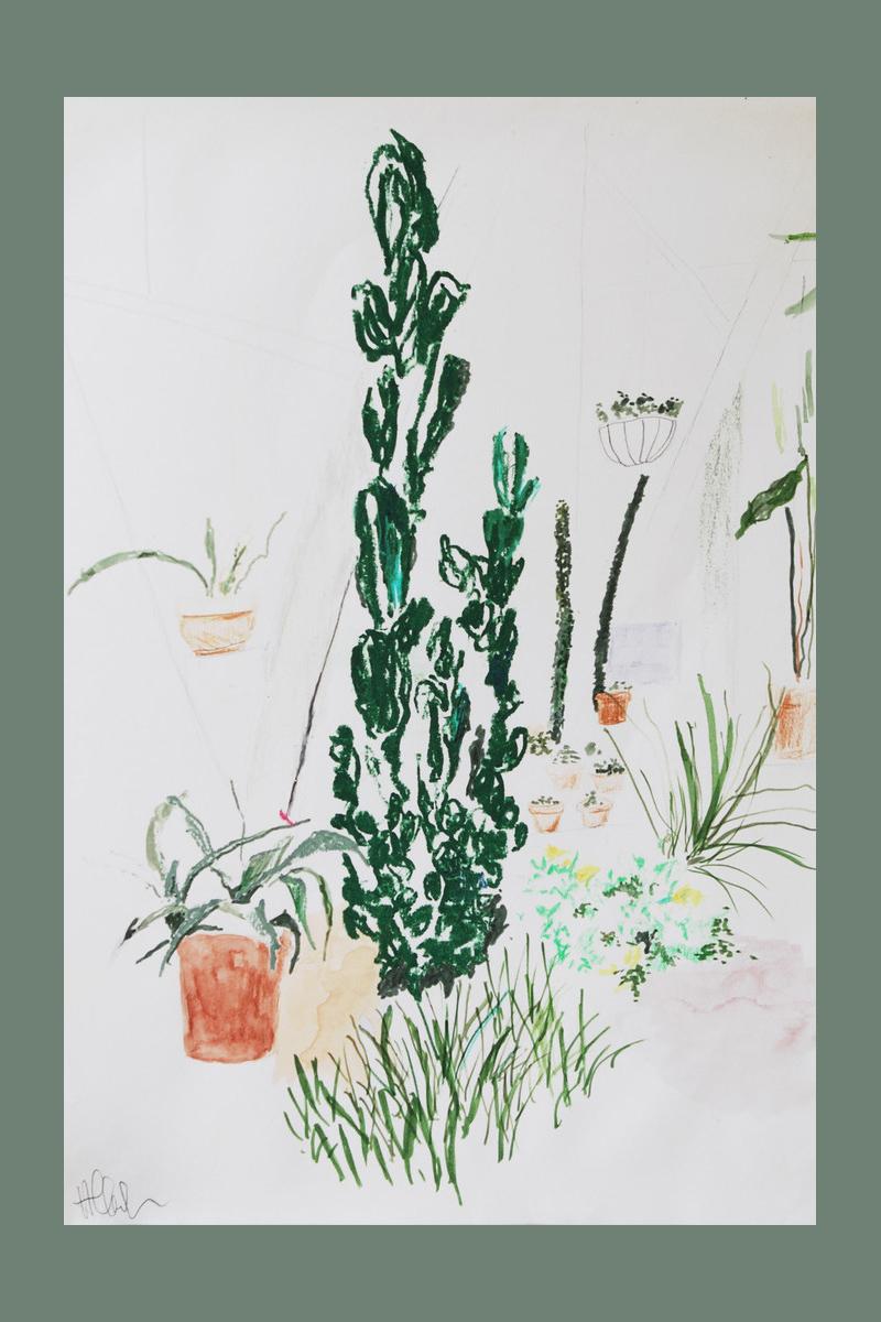 Alicia Galer | Plant Illustration
